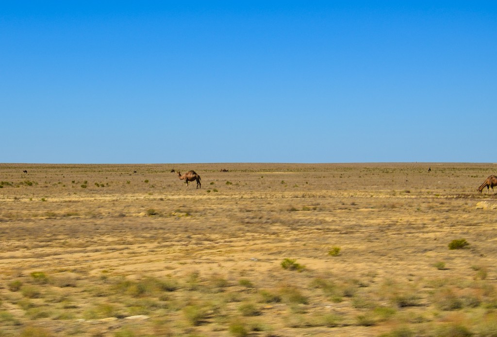 Za miejscowością Bejneu wjeżdżamy na przerażająco płaski pustynny płaskowyż Ustiurt (Plato Ustiurt).