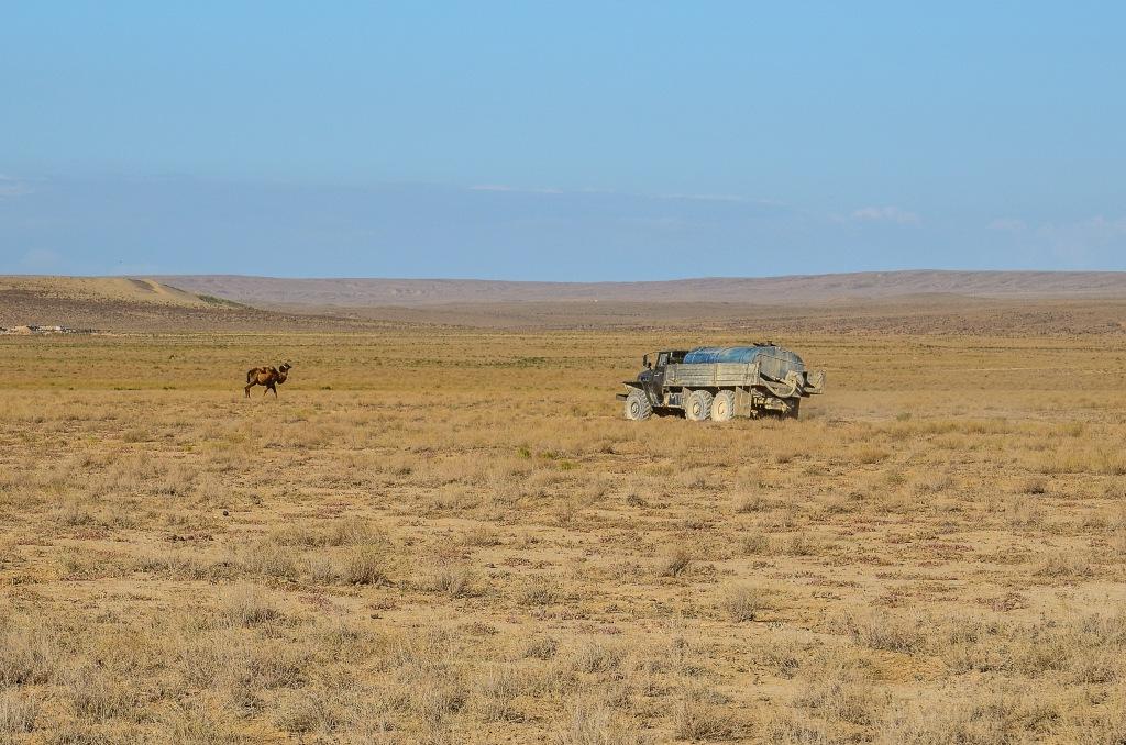 Wielbłąd w stepie Kazachstan