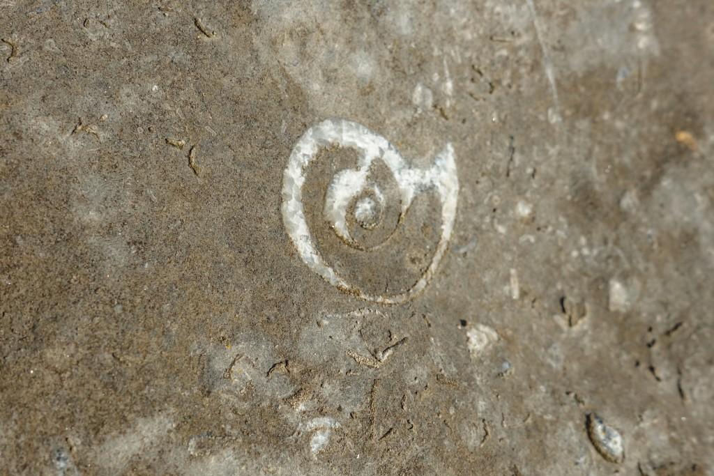 Amonit Ural