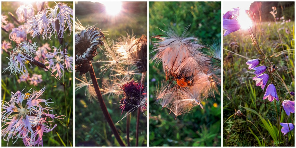 Kwiaty na Uralu