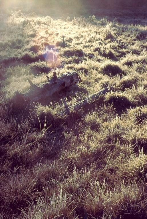 Ałtaj szadz na trawie