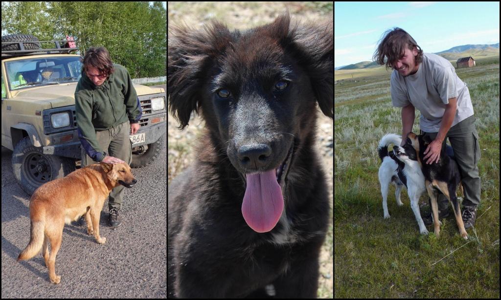 Psy w Rosji