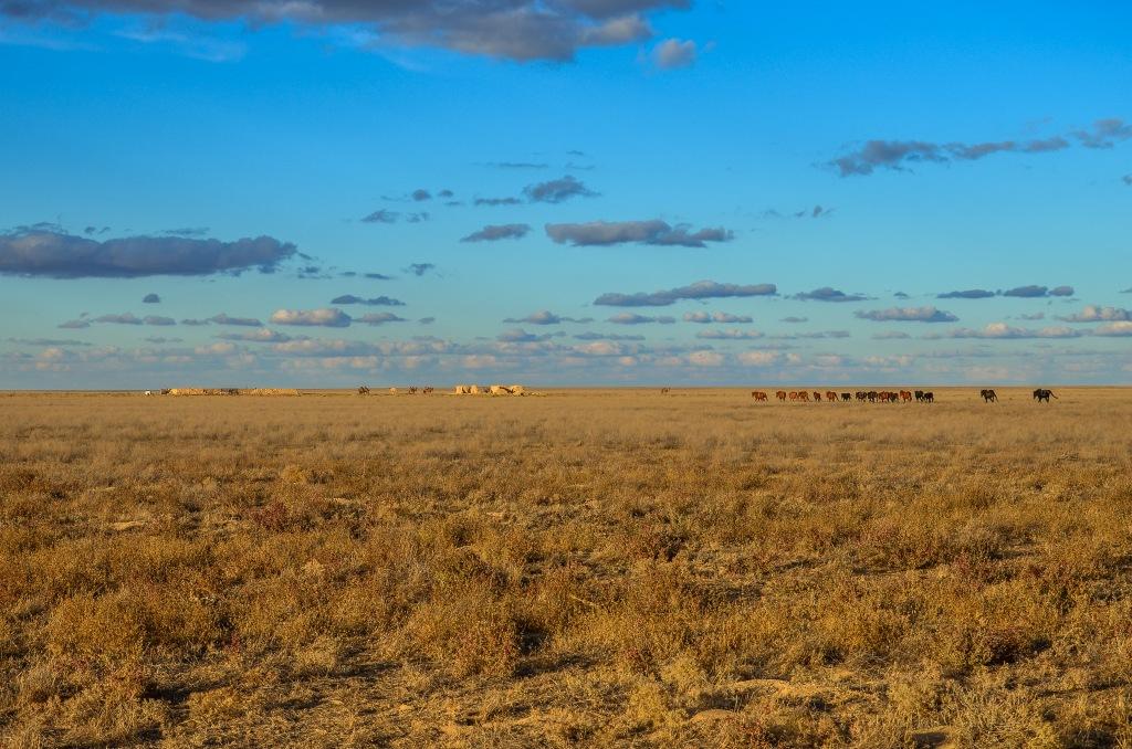 Kazachski step płaskowyż Ustiurt