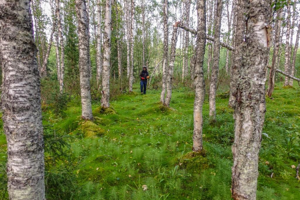 brzozowa tajga góry Ural