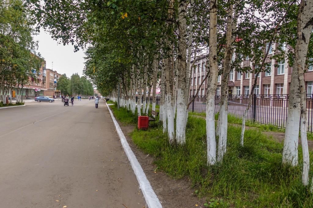 Pomalowane drzewa i krawężniki Rosja